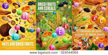 Nuts, Cereals And Dried Fruits, Vitamins And Minerals In Snacks. Vector Gluten Free Grains And Seeds