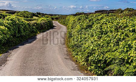 Rural Road Between Limestone Fences Covered With Greenery On Inis Oirr Island, Wonderful Sunny Day O