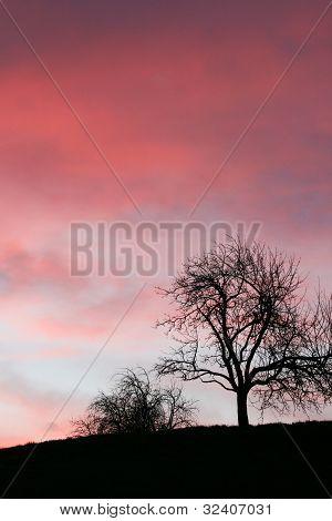 Tree In Sunrise