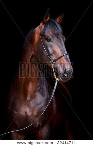 Bay horse head isolated on black background.
