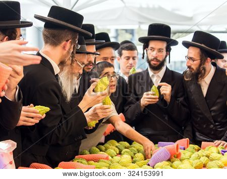 JERUSALEM, ISRAEL - SEPTEMBER 20, 2018: The concept of religious, ethnographic and photo tourism. Religious young Jews choose etrog. Pre-holiday bazaar in Jerusalem on the eve of Sukkot.