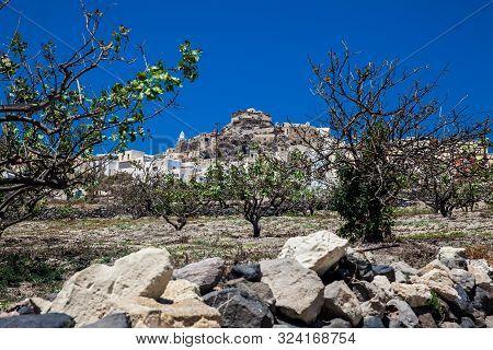 Vineyard Next To The Walking Path Number 12 To Akrotiri Village In Santorini Island In A Beautiful E