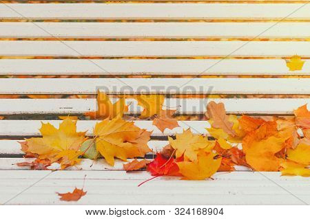 Colorful Autumn Dry Leaves Border Frame On White Painted Rustic Wooden Bench. Empty Space For Copy,