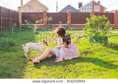 Positive Cheerful Woman Playing With Her Beloved Dog Jack Russell Terrier In The Yard Of Her Country