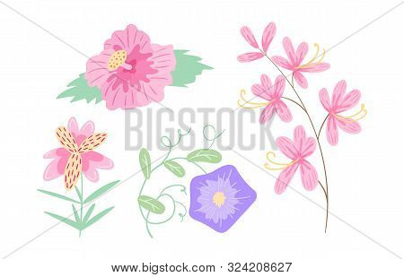 Summer Flowering Plants, Flowers. Field Hibiscus, Bindweed, Alstroemeria, Ash.