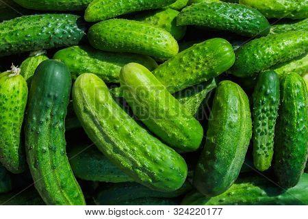 Green Cucumbers Background. Cucumbers Latin Name - Cucumis Sativus. Fresh Cucumbers In The Market. B