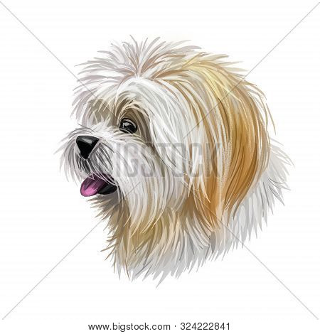 Lhasa Apso Pet With White Fur, Portrait Of Canine Digital Art Illustration. Non-sporting Dog Breed O