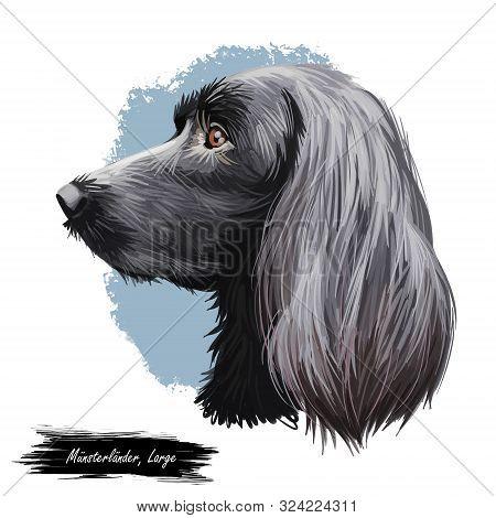 Munsterlander Large, German Originated Dog Digital Art Illustration Portrait. Profile Closeup Of Bre