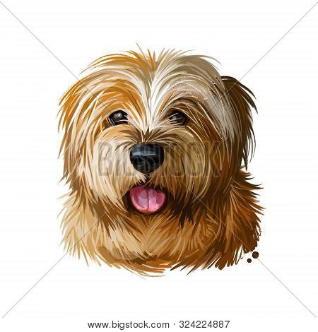 Norfolk Terrier, Watercolor Portrait Of Canis Lupus Familiaris Digital Art. Dog Originated From Grea