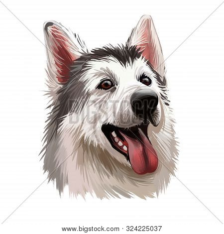 Northern Inuit Dog, Watercolor Portrait Of Canis Lupus Familiaris Closeup Digital Art. Isolated Pupp