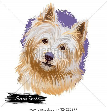 Norwich Terrier Pet With Long Fur And Kind Muzzle Digital Art. Canis Lupus Familiaris, Pet Of United