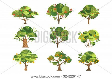 Different Fruit Trees Set, Apple, Orange, Lemon, Pear, Rowan, Apricot, Plum, Cherry Tree With Ripe F