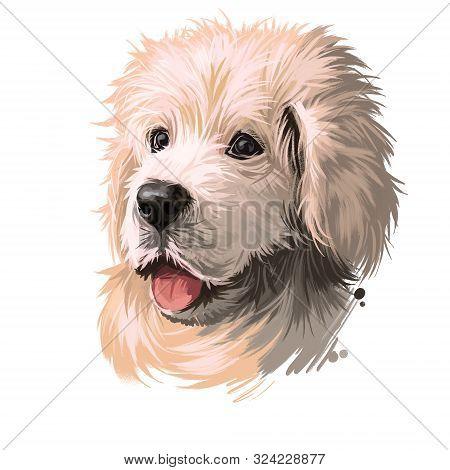 Polish Tatra Sheepdog Dog Portrait Isolated On White. Digital Art Illustration Of Hand Drawn Dog For