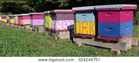 Row Of Brightly Colored Wooden Bee Hive Boxes On A Sunny Fall Day With Bees Buzzing Around With Some