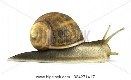 Gsrden Snail 3d Render On White Close Up