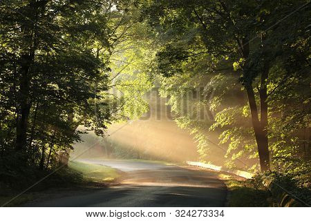 Maple trees spring forest sunrise forest Path Nature background Colors leaves foliage orange Nature background forest sun sunhine sunbeams Nature background Travel Nature Road sunshine Nature background Road mist fog Nature background Trees spring woods.