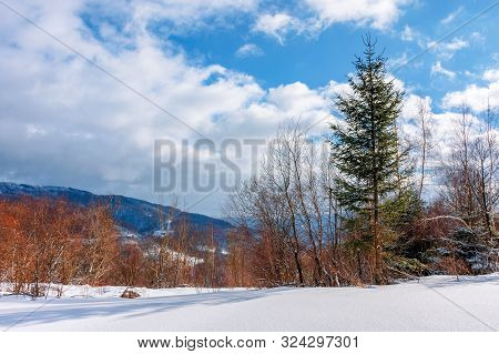 Fir Tree On The Snowy Meadow In Wintertime. Beautiful Alpine Scenery On A Sunny Day In Mountains. Wo