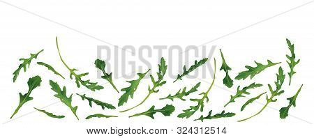 Beautiful Fresh Rucola Isolated On White Background. Salad Or Rucola. 3d Realistic Arugula With Copy