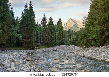 Forest River Bela With Small Round Stones And Coniferous Trees On Both Sides, Afternoon Sun Shines T