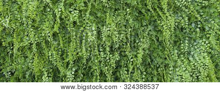Bright Green Ornamental Grass Suitable As A Border.
