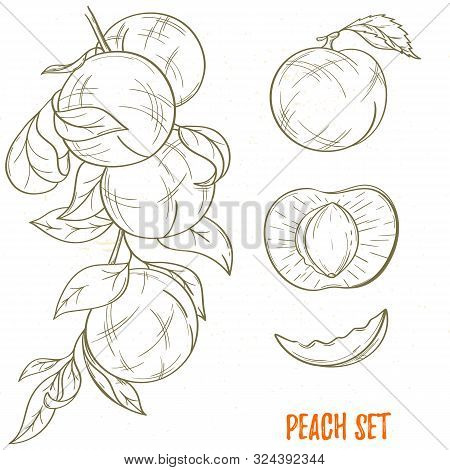 illustration peach vector photo free trial bigstock illustration peach vector photo free