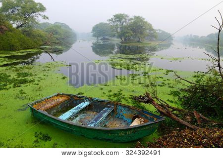 Canoe In Lake With Moss At Bharatpur In Rajasthan, India