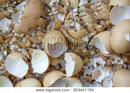 Top view of many big and small pieces of eggshells. poster