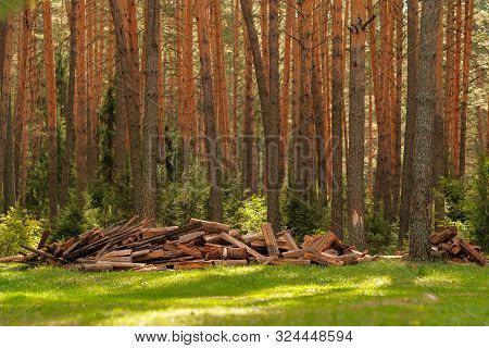 A Pile Of Firewood In The Forest. Firewood In A Forest Glade. Firewood Recycling. Pile Of Firewood.