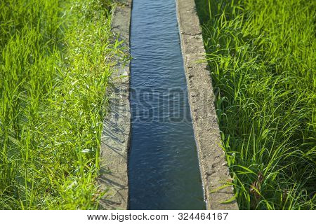 Water Channel In Rice Field. Picture Of An Irrigation Channel With Water, Passing Through A Green Ri