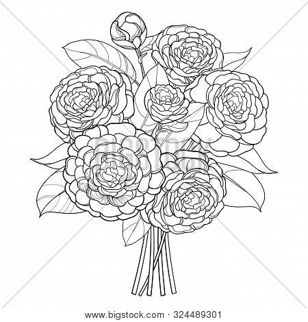 Vector Bouquet With Outline Camellia Flower Bunch, Bud And Leaf In Black Isolated On White Backgroun