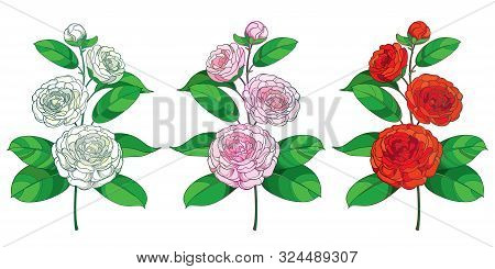 Vector Set Of Outline Branch Of  Camellia Flower, Bud And Green Leaf In Pastel White, Pink And Red I