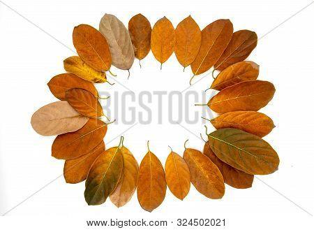 Orange Autumn Leaf On White Background. Seasonal Frame Top View Photo. Fall Season Flat Lay With Ora