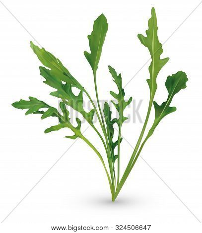 3d Realistic Rucola. Fresh Salad Or Rucola. Collection Green Leaf Arugula Isolated On White Backgrou