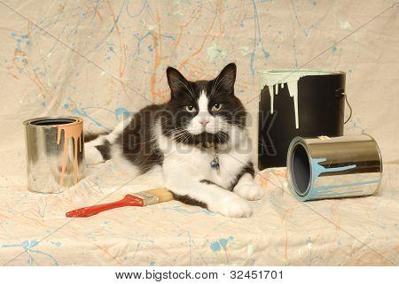 Tuxedo Cat and Paint Splatter