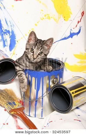 Kitten and Paint Cans