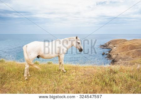 A White Horse Grazing On A Hill With The Bulgarian Black Sea Coast In The Background