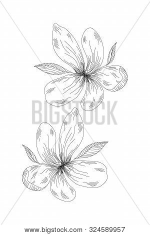 Flowers, Wild Flower Line Expand Icon On White Background