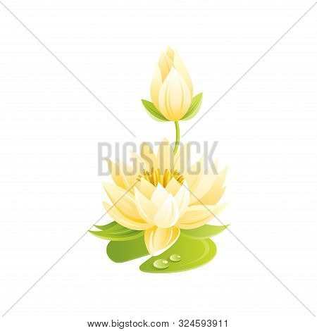 Water Lily Flower, Floral Icon. Realistic Cartoon Cute Plant Blossom, Spring, Summer Garden Symbol.