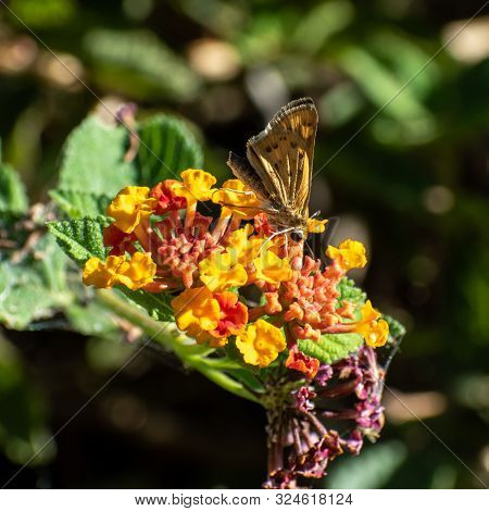 Close Of A Butterfly On Small, Colorful Flowers