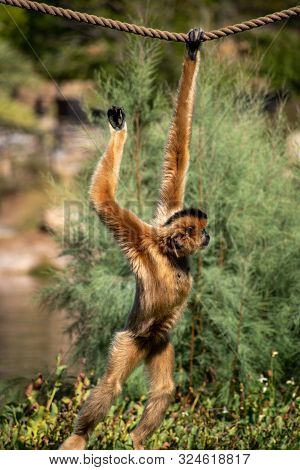 cute brown monkey hanging from a rope