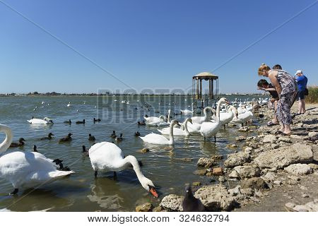 Yevpatoria, Crimea, Russia-09 September 2019: People Feeding Water Birds: Coots, Or Flatted (lat. Fu