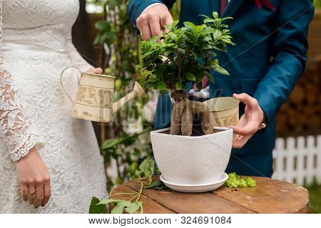 Bride And Groom Watering A Money Tree Plant. Round Wooden Table. Rustic Wedding Creative Ideas.