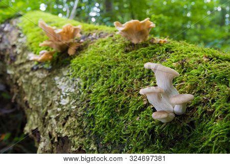 Several Mushrooms On A Rotten Tree Trunk