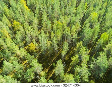 Aerial View Of A Green Forest. Beautiful Landscape. Clouds Over The Green Forest. Aerial Bird's Eye