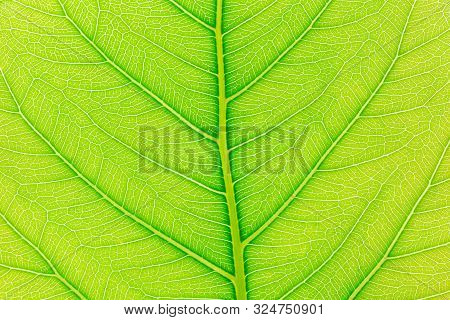 Leaf Abstract Background. Abstract Green Leaf Background For Template. Abstract Shapes For Design. A