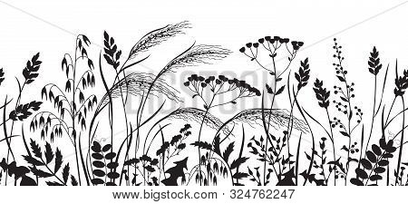 Seamless Horizontal Border Made With Monochrome Wild Plants. Black Silhouette Meadow Grass And Wildf