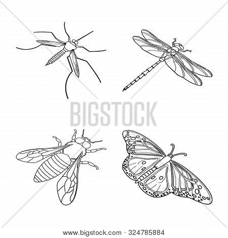 Vector Illustration Of Fauna And Entomology Icon. Collection Of Fauna And Animal Stock Vector Illust