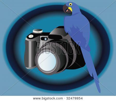 Camera and bird
