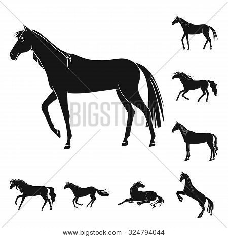 Isolated Object Of Fauna And Mare Icon. Set Of Fauna And Stallion Stock Vector Illustration.