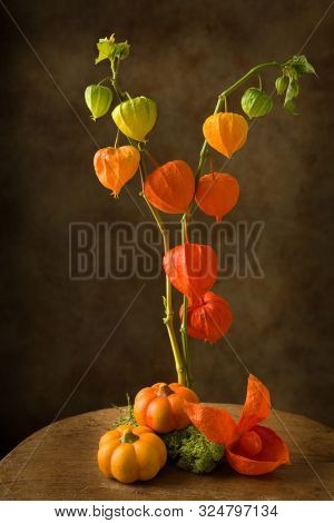 Still life with Chinese lantern flowers and moss on a textured vintage background